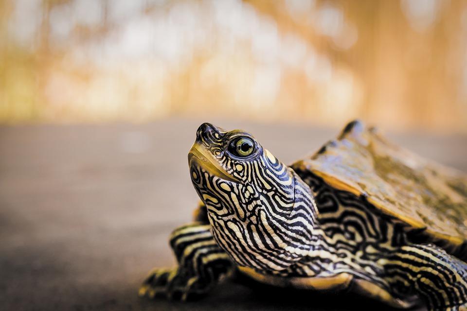 Terrarium des tortues